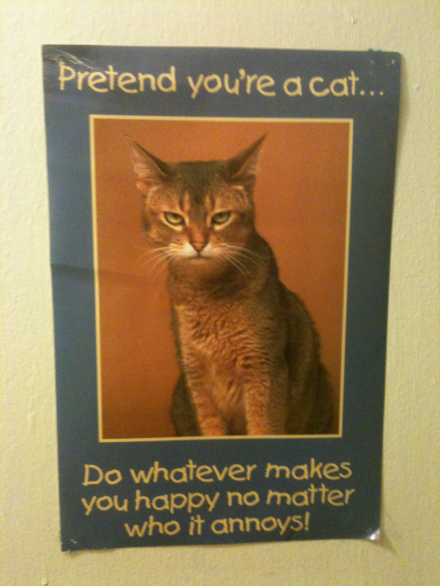This is on the closet door just to the left of the cat wall.