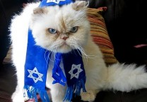 cat rabbi